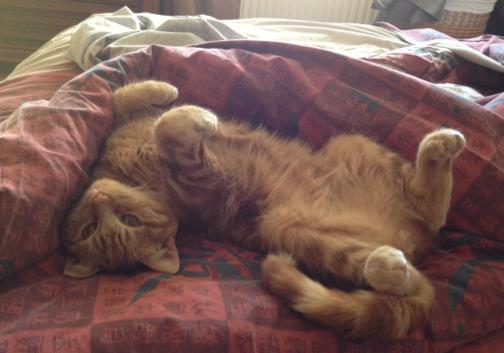 cat-2013-03-14-21-25.png
