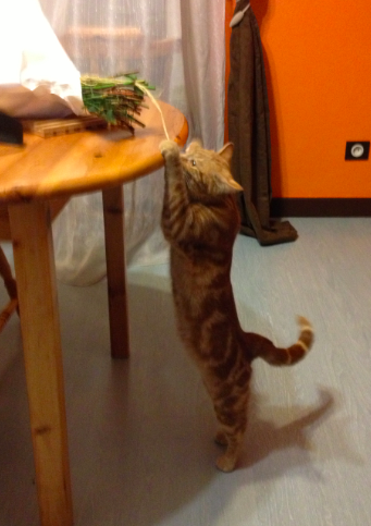 cat2-2013-03-14-21-25.png