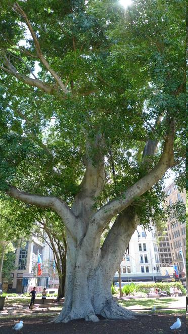 Im Schatten dieses Baumes im Hyde Park bin ich am Vortag eingeschlafen.