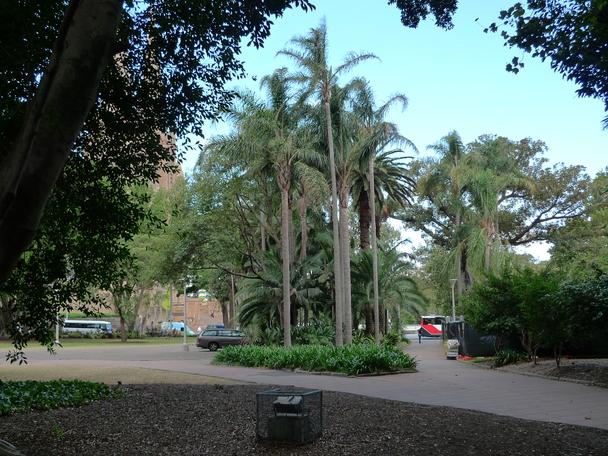 Palmen im Hyde Park.