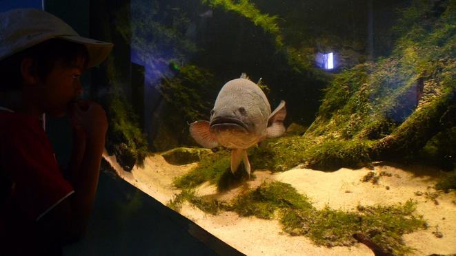 Der Fisch war ungefähr so groß wie das Kind.