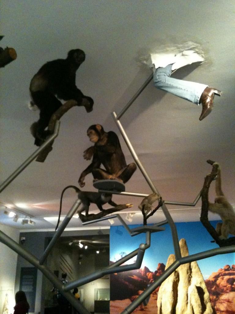 Buisson de l'évolution