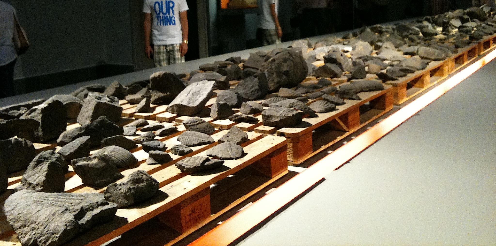 """Exposition """"Les Dieux sauvés de Tell Halaf"""". Fragments des statues bombardées"""